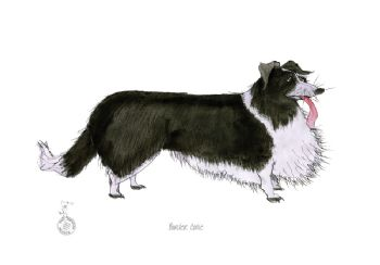 Fun Dog Cartoon Print - Border Collie